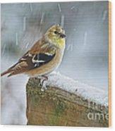 American Goldfinch - Spinus Tristis Wood Print