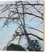 American Goldfinch In Tree Wood Print