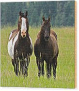 American Paint Stallion And Mare Wood Print