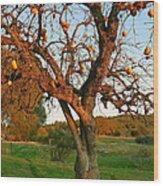 American Persimmon Tree Wood Print