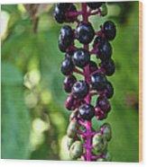 American Pokeweed Berries Wood Print