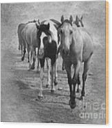 American Quarter Horse Herd In Black And White Wood Print