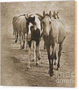 American Quarter Horse Herd In Sepia Wood Print