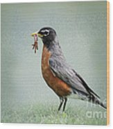 American Robin With Worms Wood Print
