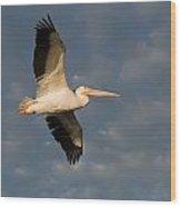 American White Pelican Pelecanus Wood Print