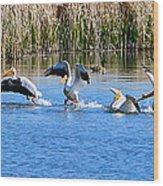 American White Pelicans Wood Print