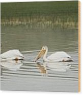 American White Pelicans Swim In A Line Wood Print