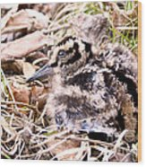 American Woodcock Chick Wood Print