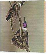 Amethyst-throated Sunangel Heliangelus Wood Print