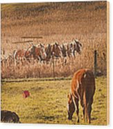 Amish Transportatin All Sizes Wood Print