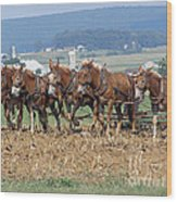 Amish Working Team  Wood Print by Louise Peardon