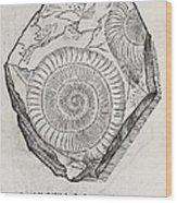 Ammonite Fossil, 16th Century Wood Print