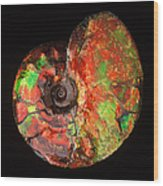 Ammonite Fossil Wood Print