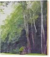 Among The Sycamores Wood Print