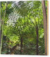 Among The Tree Ferns Wood Print
