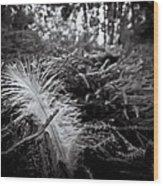 Among Thorns Wood Print
