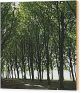 Amsterdam Bos Wood Print