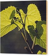 Amur River Grape Leaves (vitis Amurensis) Wood Print