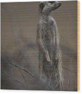An Adult Meerkat Suricata Suricatta Wood Print