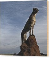An African Cheetah Guards Its Territory Wood Print by Chris Johns