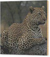 An Alert Leopard Rests On A Fallen Tree Wood Print