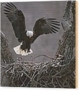 An American Bald Eagle Flies Wood Print