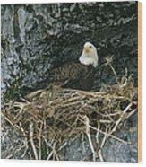 An American Bald Eagle Perches Wood Print