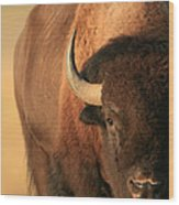 An American Bison In The Early Morning Wood Print