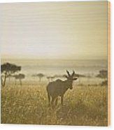An Antelope Walks In The Grassland At Wood Print