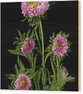 An Aster Flower Aster Ericoides Wood Print