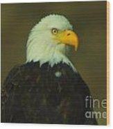 An Eagle Close Up  Wood Print