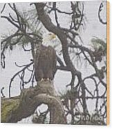 An Eagle Perched  Wood Print