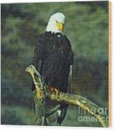 An Eagle Staring Wood Print