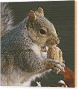 An Eastern Gray Squirrel Sciurus Wood Print