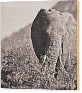An Elephant Walking In The Bush Samburu Wood Print