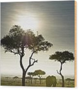 An Elephant Walks Among The Trees Kenya Wood Print