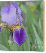An Iris Blossom Wood Print