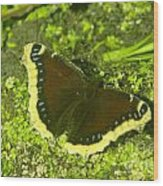 An October Butterfly  Wood Print