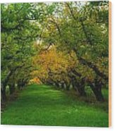 An Orchard Row  Wood Print
