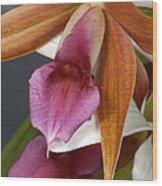 An Orchid, Probably A Cattleya Hybrid Wood Print
