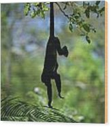 An Unidentified Monkey Hangs Wood Print