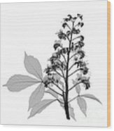 An X-ray Of A Chestnut Tree Flower Wood Print