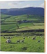 Anascual, Dingle Peninsula, Co Kerry Wood Print
