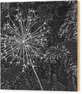 Anatomy Of A Flower Monochrome 2 Wood Print