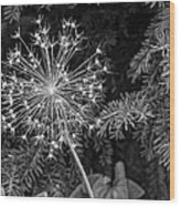 Anatomy Of A Flower Monochrome Wood Print