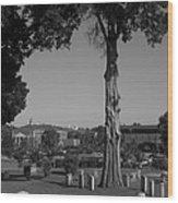Ancient Cedars And Tombstones Wood Print