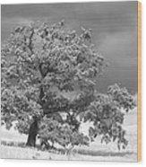 Ancient Oak Wood Print