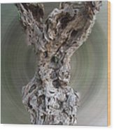 Ancient Old Olive Tree Wood Print