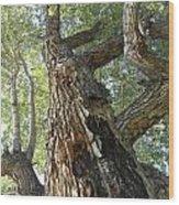 Ancient Poser Wood Print