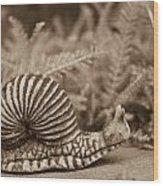 Ancient Snail Wood Print